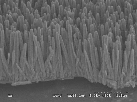 This scanning electron microscope image shows tiny nanorods growing on the disk. Image Credit: Din Ping Tsai, National Taiwan University